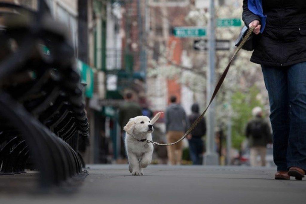 Cani, gatti e altri animali urbani: ecco le regole per garantire una serena convivenza
