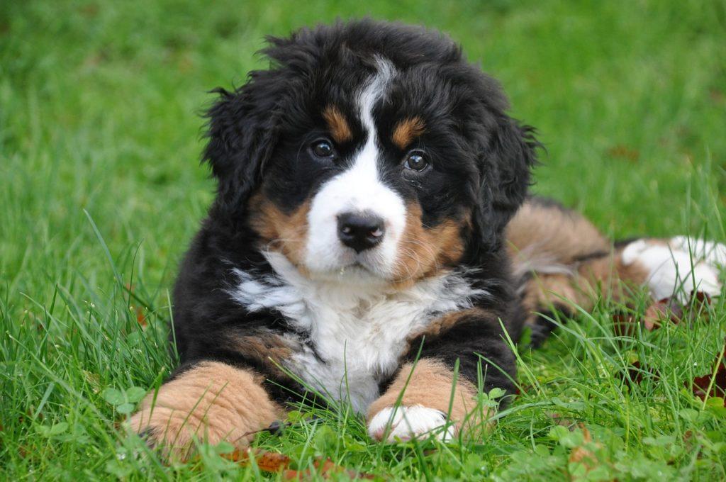 Adottare un cucciolo con le carte in regola: allevamento VS fai da te